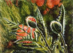 Papavers in de dop (2002), watercolour 13,5 x 18,5 cm- Sold