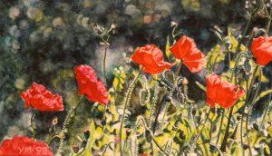 Poppies in E. (1998), aquarel 15 x 24,5 cm - Sold