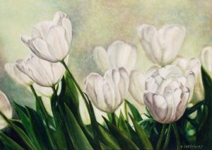 Tulips from Amsterdam, watercolour 27 x 37,5 cm - Euro 650